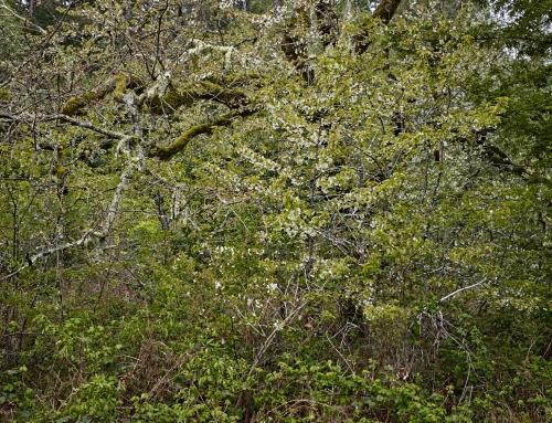 Lumen Naturae Book One – Forest